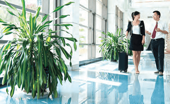 Creating a Company Culture: Incorporating Wellness into Your Office Space